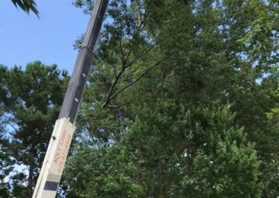 FB08132019-emergency-tree-services-holly-springs-1