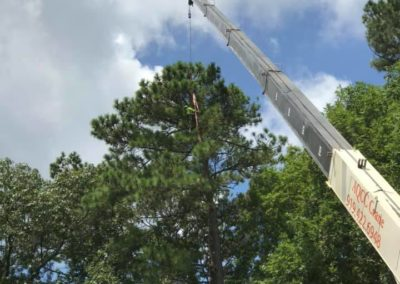 FB08132019-emergency-tree-services-holly-springs-3