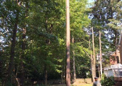 FB08132019-tree-company-apex-9