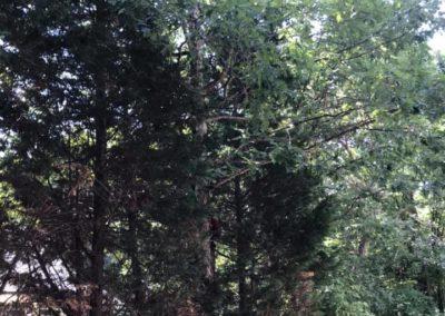 FB08132019-tree-company-cary-10
