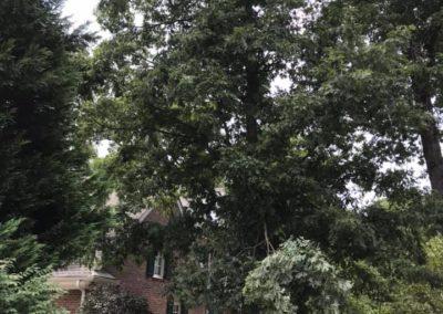 FB08132019-tree-company-cary-11