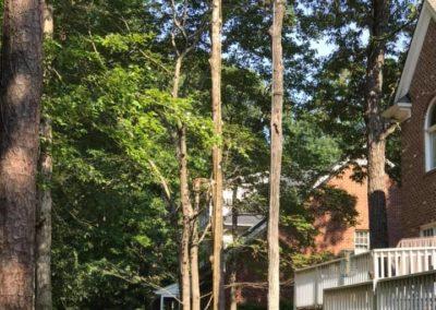 FB08132019-tree-company-cary-12