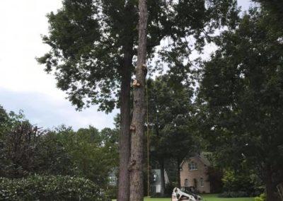 FB08132019-tree-company-fuquay-varina-6