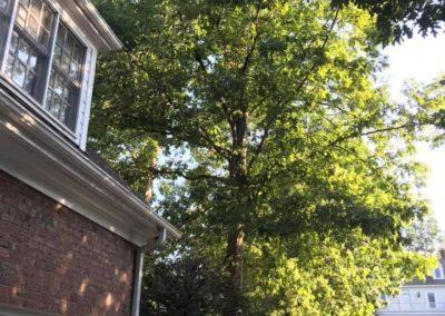 FB08132019-tree-company-raleigh-14