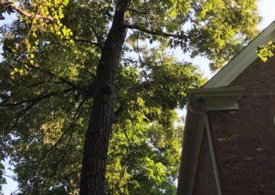 FB08132019-tree-company-raleigh-15