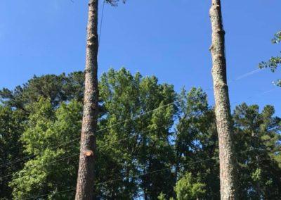 FB08132019-tree-cutting-service-apex-7