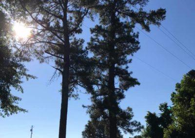 FB08132019-tree-cutting-service-apex-8