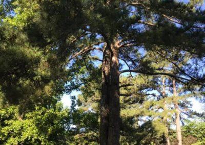 FB08132019-tree-cutting-service-apex-9
