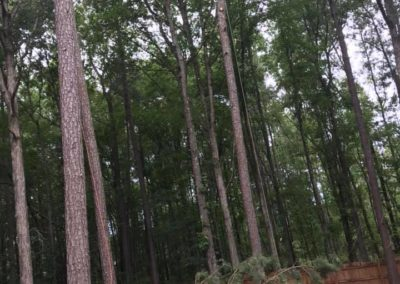 FB08132019-tree-cutting-service-cary-11