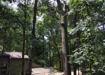 FB08132019-tree-cutting-service-fuquay-varina-4