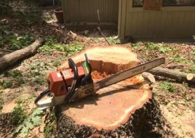FB08132019-tree-cutting-service-holly-springs-1