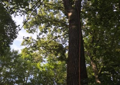 FB08132019-tree-cutting-service-holly-springs-3
