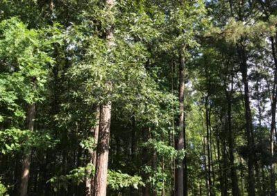FB08132019-tree-cutting-service-raleigh-14