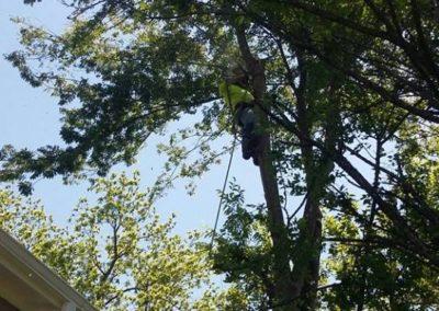 FB08132019-tree-removal-apex-9