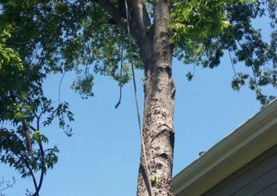 FB08132019-tree-removal-cary-10