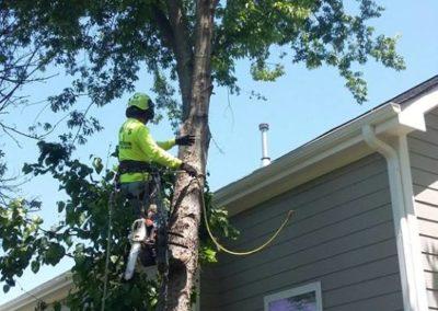 FB08132019-tree-removal-cary-11