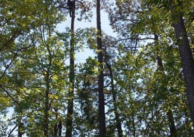 FB08132019-tree-removal-cary-12