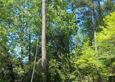 FB08132019-tree-removal-fuquay-varina-4