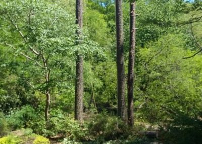 FB08132019-tree-removal-raleigh-13