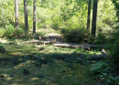 FB08132019-tree-removal-raleigh-14