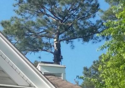 FB08132019-tree-removal-raleigh-15