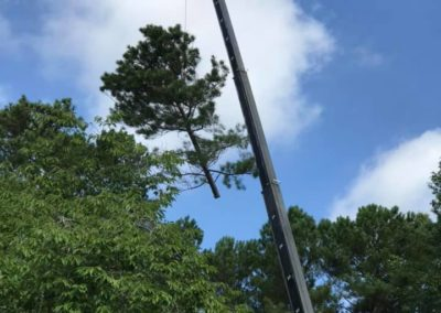 FB08132019-tree-removal-services-apex-7