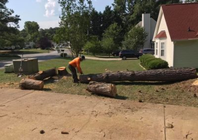 FB08132019-tree-removal-services-cary-12