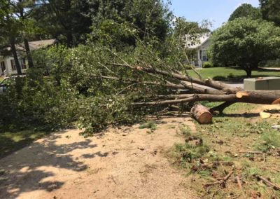 FB08132019-tree-removal-services-raleigh-13