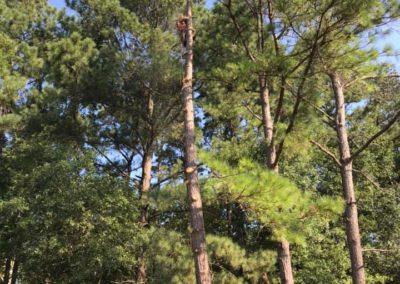 FB08132019-tree-services-apex-9