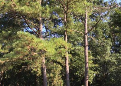 FB08132019-tree-services-cary-10