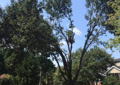 FB08132019-tree-services-fuquay-varina-4