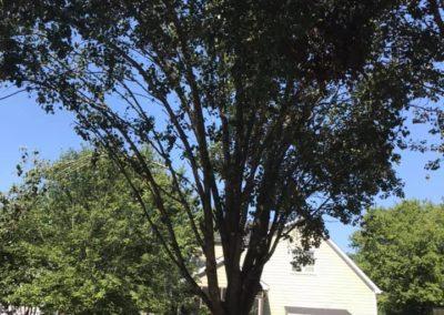 FB08132019-tree-services-fuquay-varina-5