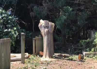 FB08132019-tree-services-fuquay-varina-6