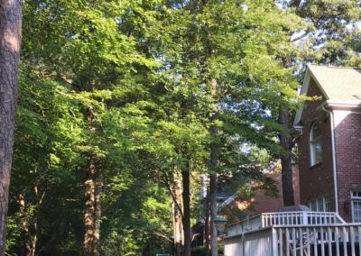 FB08132019-tree-services-holly-springs-1