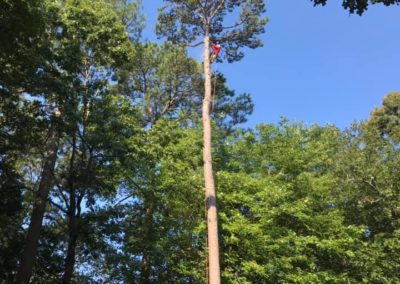 FB08132019-tree-services-holly-springs-2